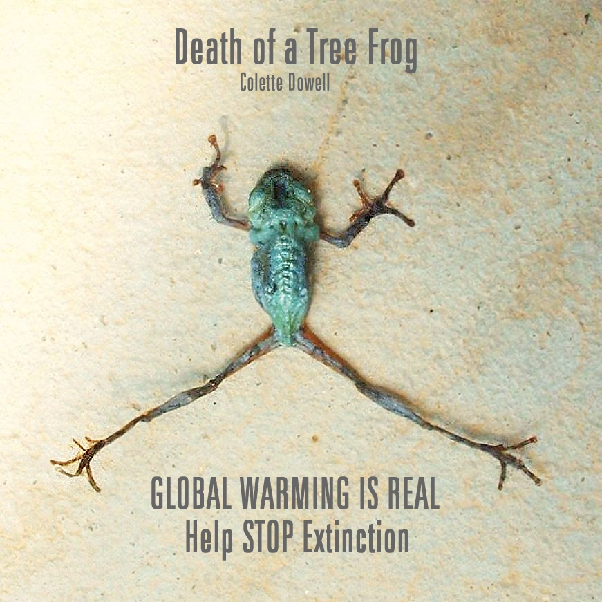 Tree Frog dead from heat climate change photograph by Colette Dowell