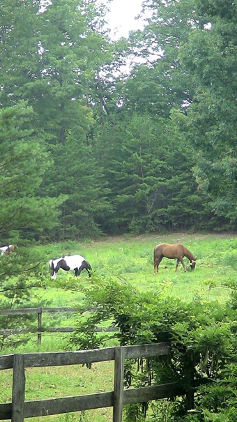 organic farm North Carolina Horse pastures riding rink Timber Home